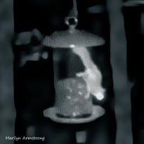 180-Shining-Eye-Flying-Squirrels-12_03222020_1025