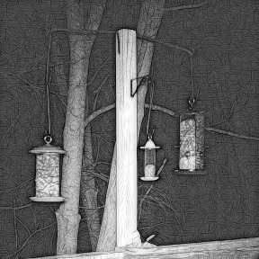 180-Square-No-Flying-Squirrel-Night_Two_03052020_002
