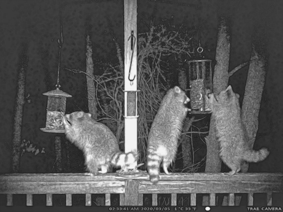 180-Three-Raccoons_BW_03042020_019