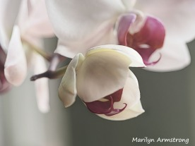 300-baby-five-orchids_03202020_032