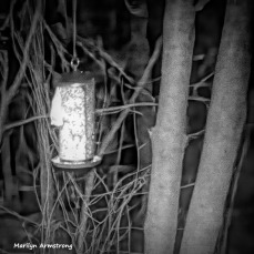300-BW-Square-Flying Squirrels-Ten_03172020_0132