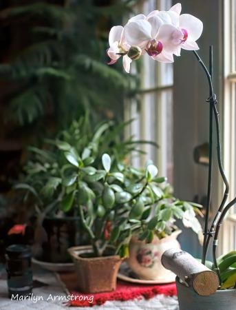 300-five-orchids_03172020_025-sharpen