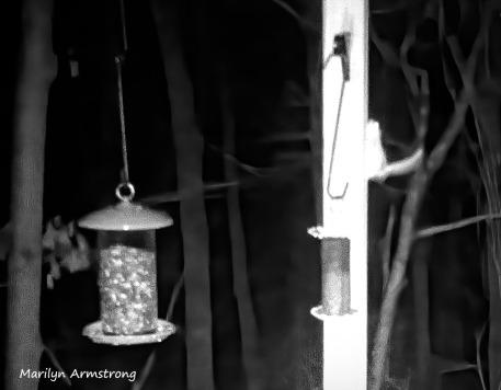 300-Flying-Squirrels-Night-6_03132020_102