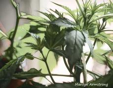 300-indoor-garden_03202020_017