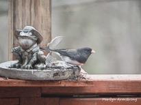 300-junco-toad-snow-birds_03202020_006