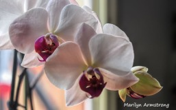 300-new-five-orchids_03202020_006