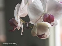 300-new-five-orchids_03202020_027