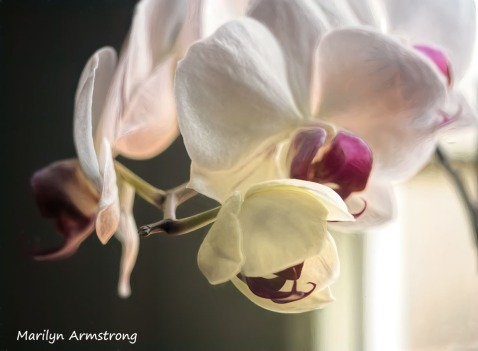 300-new-five-orchids_03202020_030
