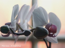 300-orchids-march-03012020_111