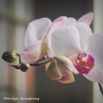 300-square-four-orchids_03032020_203