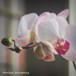 300-square-four-orchids_03032020_203