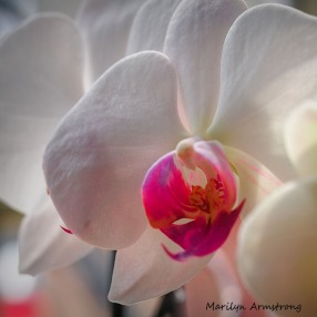 300-square-macro-orchids-3-11_03112020_107