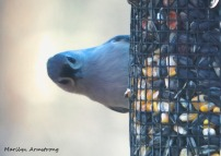 300-titmouse-portrait-birds_two_03042020_024