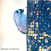 300-titmouse-portrait-birds_two_03042020_025