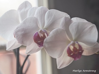 300-young-five-orchids_03162020_021