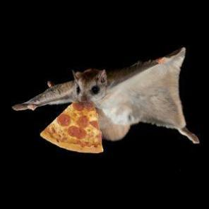 Flying-squirrel-eating-pizza