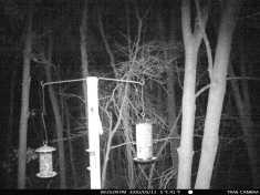 Flying-Squirrels-Night-6_03112020_107
