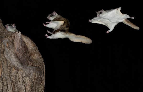 Gliding through the air