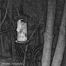 180-BW-Square-Bkbinder-Flying-Squirrels_0405-04052020_NEW_029