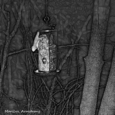 180-BW-Square-Bkbinder-Flying-Squirrels_0405-04052020_NEW_044
