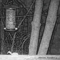 180-BW-Square-Bkbinder-Flying-Squirrels_0405-04052020_NEW_211