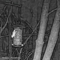 180-BW-Square-Bkbinder-Flying-Squirrels_0405-04052020_NEW_217