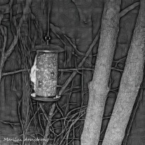 180-BW-Square-Bkbinder-Flying-Squirrels_0405-04052020_NEW_219