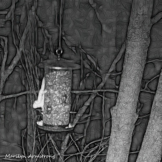 180-BW-Square-Bkbinder-Flying-Squirrels_0405-04052020_NEW_220
