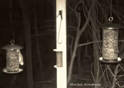 180-Flying-Squirrels_0405_04052020_270