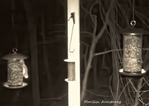 180-Flying-Squirrels_0405_04052020_270