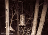 A glider and a feeder by the light of the full moon
