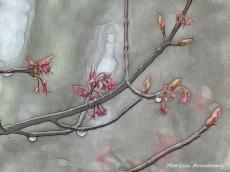 180-Maple-Flowers_04212020_006