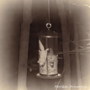 180-Square-BW-Choco-Flying-Squirrels_04252025_368