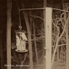 180-Square-BW-Two-Flying-Squirrels_04252025_371