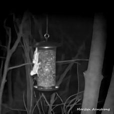 180-Square-Double-Flying-Squirrels_040704072020_436