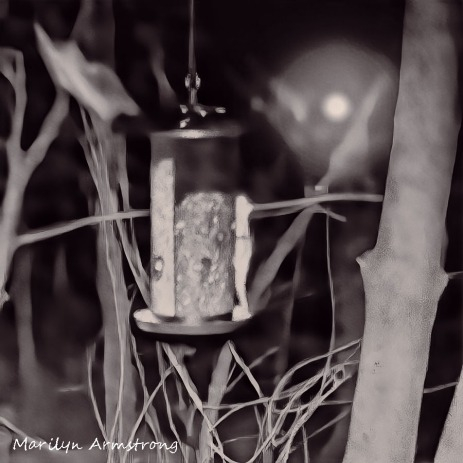 180-Square-Dreamy-Flying-Squirrels-0318_03182020_045