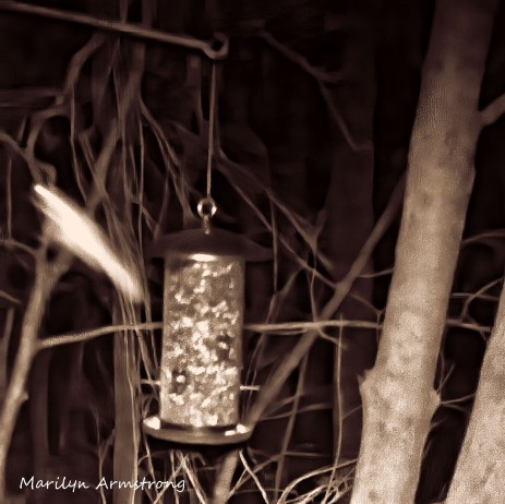 180-Square-Gliding-Flying-Squirrels_0405-04042020_202