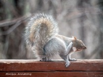 300-itchy-squirrel_04022020_066