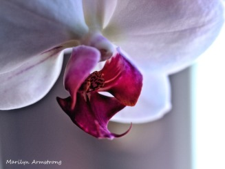 A perfect Orchid and more to come