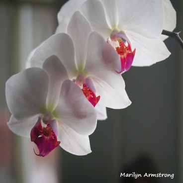 300-square-new-orchids_04182020_004