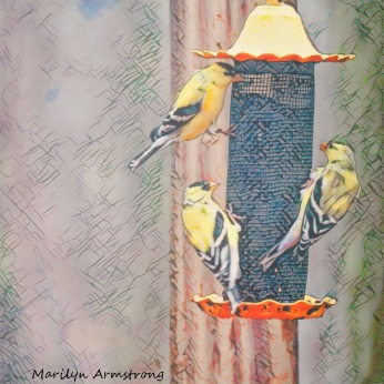 300-square-remix-sketch-goldfinches_04132020_092