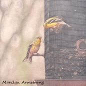 Sketchy Goldfinches
