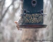 300-squirrel_04022020_054.