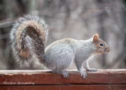 300-squirrel_04022020_063