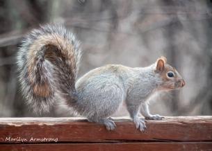 300-squirrel_04022020_063