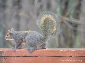 300-squirrel_04022020_068