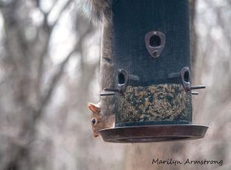 300-squirrel_0402_04022020_003