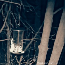 72-Sqiare-BW-Flying-Squirrels_04262025_632