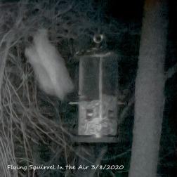 96-Flying-Squirrel-03082020_106