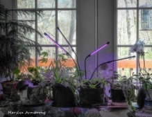 180-Greenery-under-lights_05052020_0001